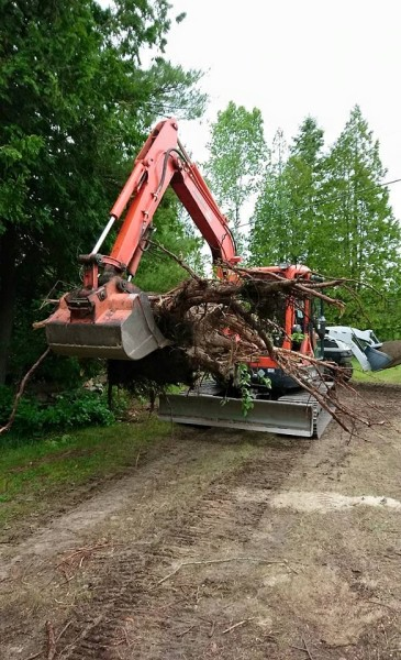 Pulling out a tree stump