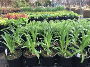 Lots of grasses and perennials too!