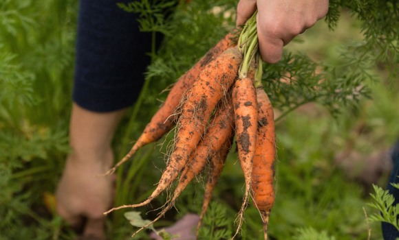 A New Way to Get Local Produce